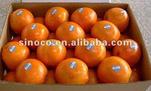 Navel orange citrus fruit