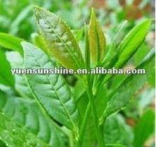 Natural Green Tea Extract /Tea Polyphenol, Catechin, EGCG