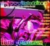 IRIS Platinum -Maximize Growth hydroponics nutrient led grow light UK
