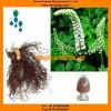 Black Cohosh Powder Triterpene Glycosides 2.5% HPLC Anticancer