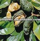 Kola Nut extract(P)
