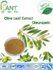 High Quality Water solube Olive leaf extract (Oleuropein 10%--98%)