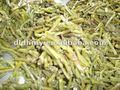 مملحة 2012 جودة عالية الأحدث السرخس نبات السرخس في نوع cutted في تعزيز
