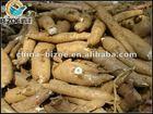 Large capacity cassava seeds