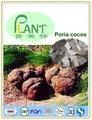 Di alta qualità di 30% cocos poria polisaccaride estratto