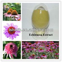 2012 Hot Selling Echinacea Extract (polyphenol 4.0%. UV)