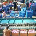 الصين الفاكهة فوجي