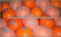 fresh china navel orange for sale