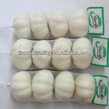 4p,200g normal white garlic supplier