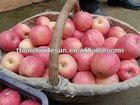 Desun fresh juicy fuji apple 2012 new crop