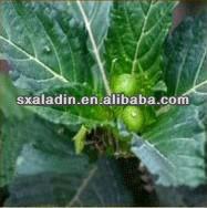 Supply 100% Natural Damiana Leaf Powder Pass 80-120 mesh