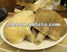 Canned abalone Mushroom in Brine