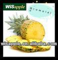 Wisapple GMP bromelina papaína activo farmacéutica ingredientes