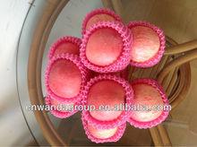 fresh fuji apples bulk material-2012 Yantai new crop --1277