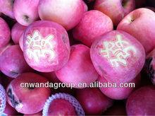 fresh blushed fuji apples GRADE A-2012 Yantai new crop --1278