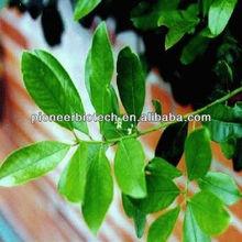 Slimming ingredient Yerba Mate powder 98% in bulk supply