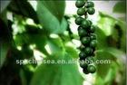 100% Pure Pepper Black Essential Oil