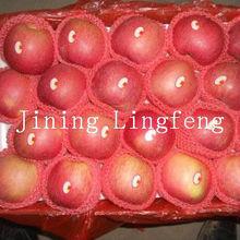 2012 top quality fuji apple /2012 new crop