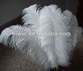 Plumas de avestruz para decoración de bodas