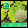 kava extract herbal extract