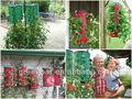 Un cultivo de plantas de fresa para greenstuff& frutas