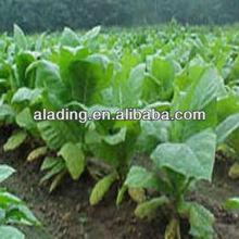 Nicotiana Tabacum Extract, Solanesol