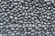 black bean crop 2012