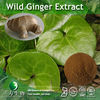 Asari Extract / Wild Ginger Extract 4:1,10:1, 20:1