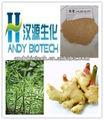 La planta natural puro extracto de raíz de jengibre p. E. 20:1