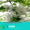 Troxerutin EP6,Pur-Rutin,Sophora japonica Extract