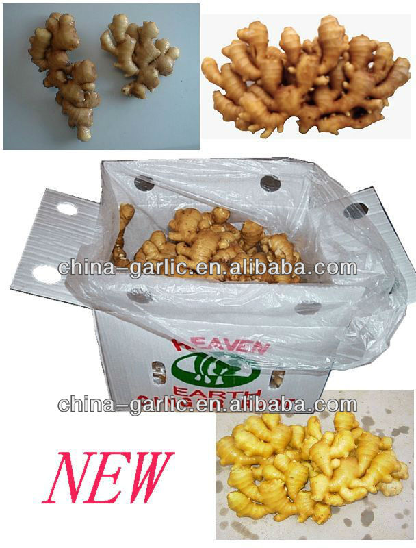 New!!! Buyer of Ginger , low price, higher quality