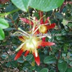 Passiflora incarnata dry flower powder, herb medicine, harried business person's herb