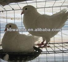 bird cage/bird cage hexagonal wire mesh stainless steel/bird cage materials