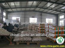"""""""Buy 2012 Fresh Bulk Fresh Garlic""""/Garlic Factory in China"""