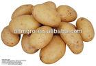Fresh Potato for Sale