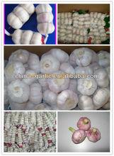 Fresh White Garlic/Pure White Garlic Specification Price 2013