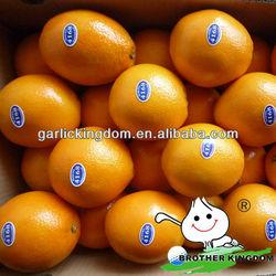 new crop fresh navel orange from origin