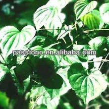 Bulk herbal Extract Black Cohosh P.E.2.5%/ Kosher certificated Shanghai Passiono