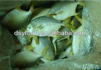 frozen golden pomfret fish