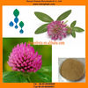 Natural Red Clover Extract Powder, Sample Supply, Health Supplement