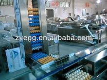 ZENYER 10000pcs/h stainless egg grader stacker machine