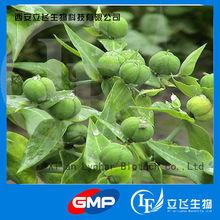 Caper Spurge extract/Mole Plant extract ( 98% Euphorbiasteroid)