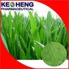 High quality green Barley grass juice powder in bulk