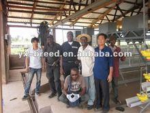 2012 best sale broiler rearing cage in Algeria