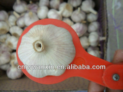 Garlic Supplier