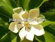 magnolia officinalis bark extract
