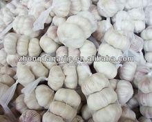 chinese natural garlic producers
