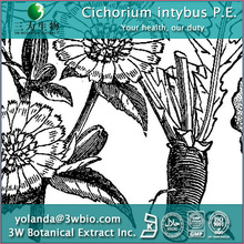 Cichorium intybus P.E. - Herbal Extract