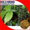 Fiveleaf Gynostemma Herb Extract 80% Aypenoside/Gypenosides