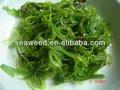 النباتات المائية 2013 اسم أعشاب البحر